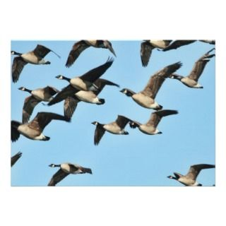 Canada Geese Flock in Flight Custom Announcements