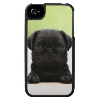 pug puppy photo case for the iPhone 4