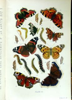 CA1916 Kirby Butterflies and Moths of The United Kingdom 70 Plates in