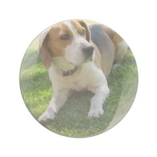 Beagle Hound Dog Coasters