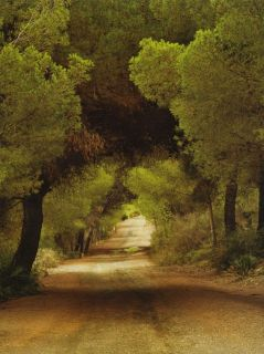 Country Woods Dirt Road Memory Lane Wallpaper Mural