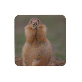 funny prairie dog drink coasters