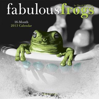 Fabulous Frogs 2013 Wall Calendar 0767190998