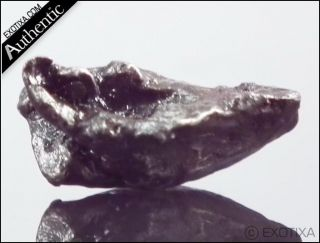 11g Sikhote Alin Iron Meteorite from Russia w Case MQ44