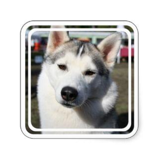 Siberian Husky Dog Square Sticker