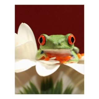 red eyed tree frog personalized letterhead