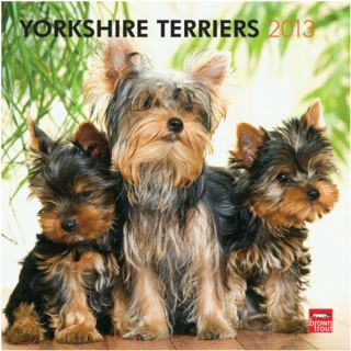 BrownTrout 2013 Yorkshire Terriers Wall Calendar   Gifts for Dog
