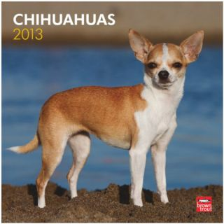 BrownTrout 2013 Chihuahuas Wall Calendar   Gifts for Dog Lovers   Dog