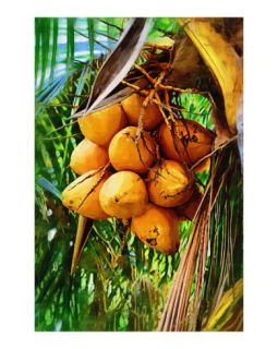 Coconuts on tree   , Oil painting Fairchild Tropical Garden in Coral Gables, Florida Giclee Print by Palm Images