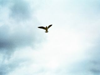 A Big Bird Flying in the Sky Photographic Print