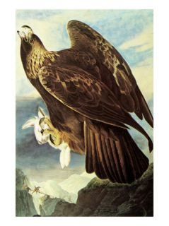 Golden Eagle Premium Poster by John James Audubon