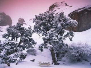 Empty Bench under Snow Covered Trees, Arches National Park, Utah, USA Photographic Print