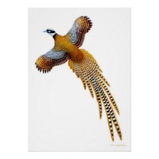 Flying Reeves Pheasant Print