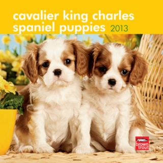 Cavalier King Charles Spaniel Puppies   2013 Mini Calendar Calendars