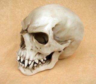 Orc Schädel Markus Mayer Totenkopf Skull Gothic NEU TOP