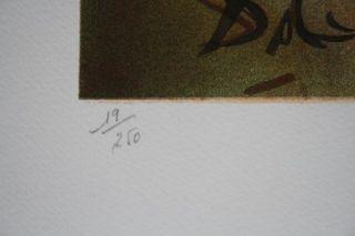 Salvador Dali  LITHOGRAFIE handsigniert + nummeriert 19/250