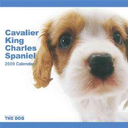 Cavalier King Charles Spaniel 2009 Calendar (Paperback)