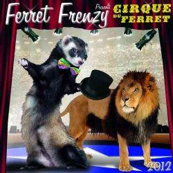Ferret Frenzy 2012 Calendar (Calendar)