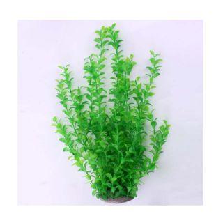 Aquarium Hornwort Aquatic Submerged Plants