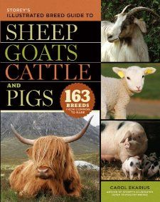 Storeys Illustrated Breed Guide to Sheep, Goats, Cattle and Pigs: 163
