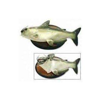 Cool Catfish The Singing Sensation