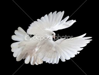 free flying white dove  Stock Photo © Irina Tischenko #1337278