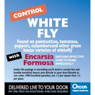 Orcon White Fly Control with Encarsia Formosa Eggs   Flying Insects at